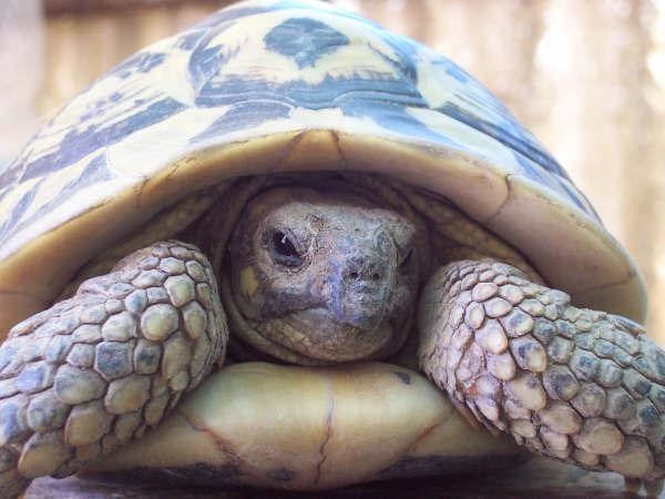 tartaruga procrastinacao