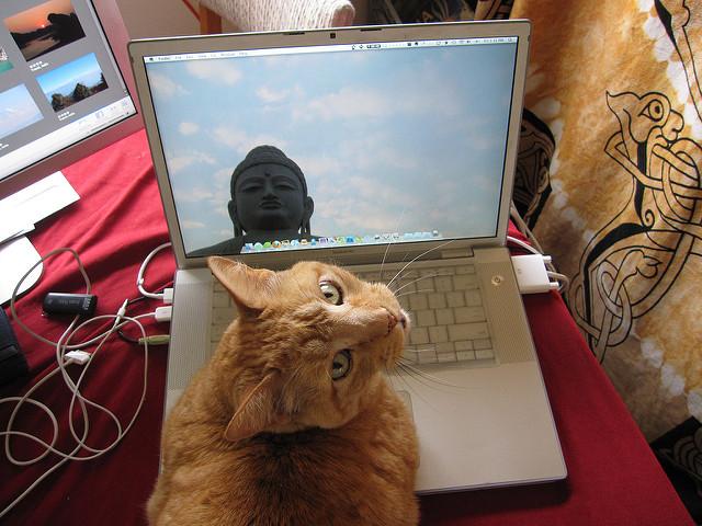 gato usando computador